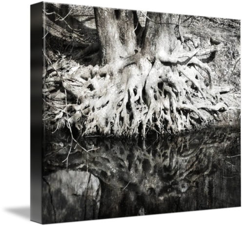 MKC Photography Roots Canvas