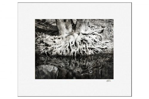 MKC Photography Roots Matted Print