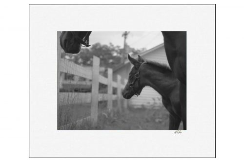 MKC Photography Watchful Matted Print Sample