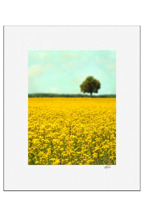 MKC Photography Yellow Fields Matted Print