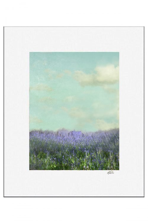 Bluebells Matted Print